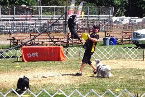Puyallup, WA: Flying dogs
