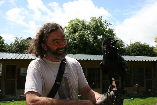 Kilmallock, Irland: Denis laughing with Bran, the raven
