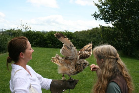 Kilmallock, Irlanda: Rosie tells me about a beautiful owl