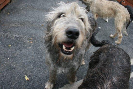 Kilmallock, Ирландия: Woof!