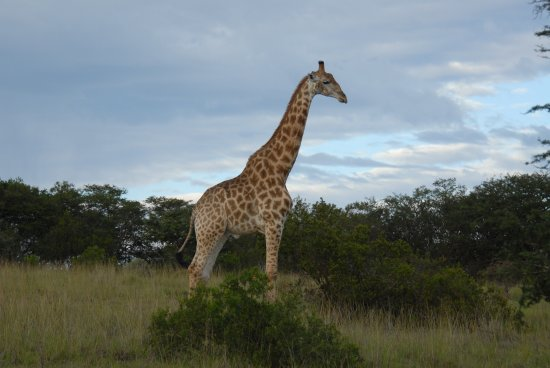 Eastern Cape, South Africa: Majestic wildlife!