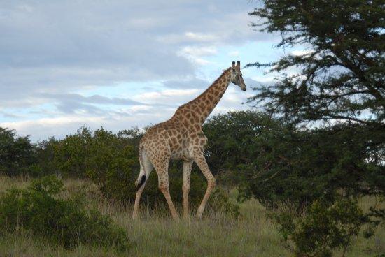 Eastern Cape Foto