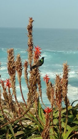 Tsitsikamma National Park, Sudáfrica: Bird, bush and beach absolutely wonderful