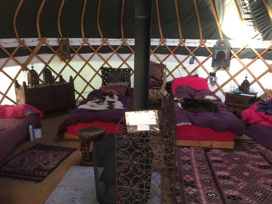 Newton Poppleford, UK: Inside our Yurt
