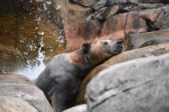 Asheboro, NC: Zoo
