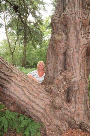 Virginia Water, UK: Lovely Trees!