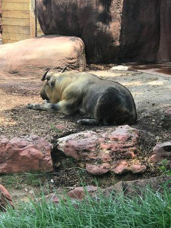 St. Louis Zoo Photo