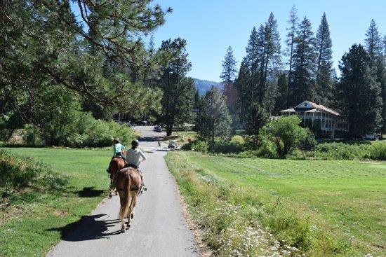 Yosemite Mule & Horseback Rides