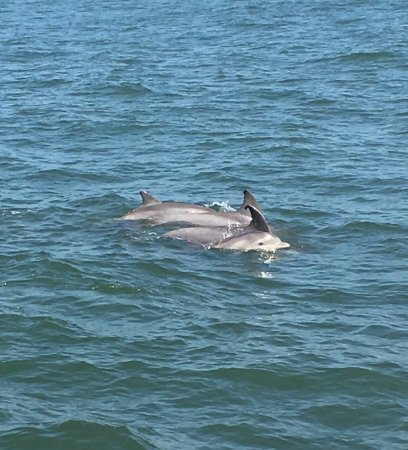 Silver Bullet Tours: Dolphins of coast of Cape May