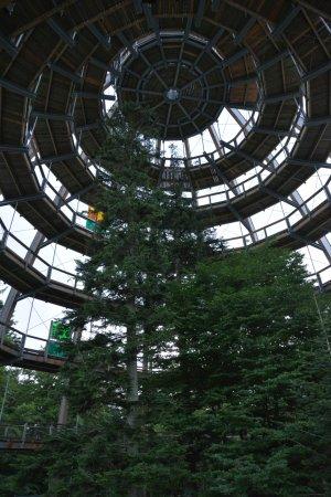 Grafenau, ألمانيا: Inside of Baumwipfelpfad