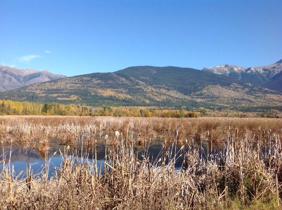 Valemount, Canadá: Swift Creek Loop a view from trail that cuts across the creek and is a good 2 hrs across a well