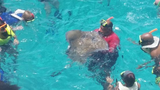 Don Foster's Dive Cayman: Found a stingray by staff