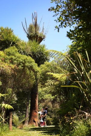 Coromandel, New Zealand: Regenerated native New Zealand forest.