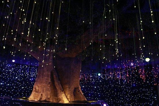 Шаньтоу, Китай: 萤火虫奇幻空间