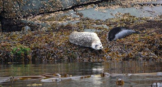 Telegraph Cove, Kanada: Seals