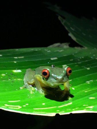 Santa Elena, Costa Rica: photo0.jpg