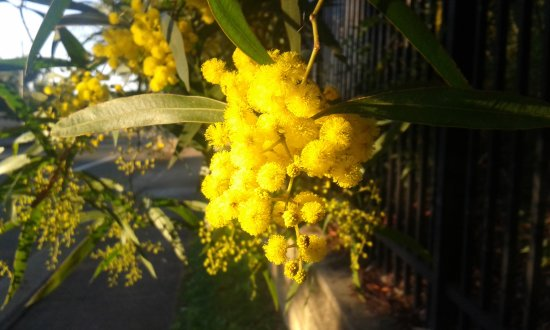 Benowa, Australia: Bright flowers on an early morning walk...