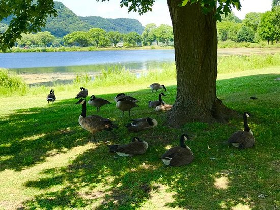 Lake Park, Winona, MN