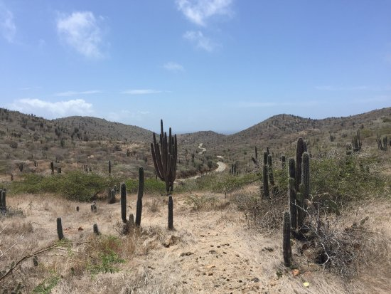 Santa Cruz, Aruba: photo4.jpg