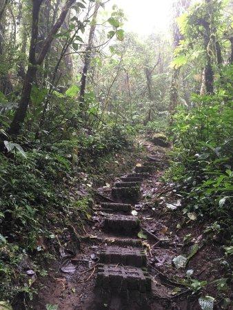 Riserva Biologica Bosco nebbioso Monteverde, Costa Rica: photo0.jpg