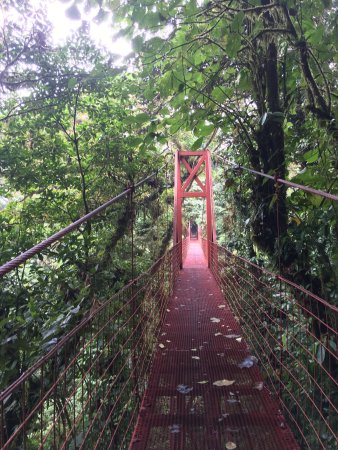 Reserva Biológica Bosque Nuboso Monteverde, Costa Rica: photo1.jpg