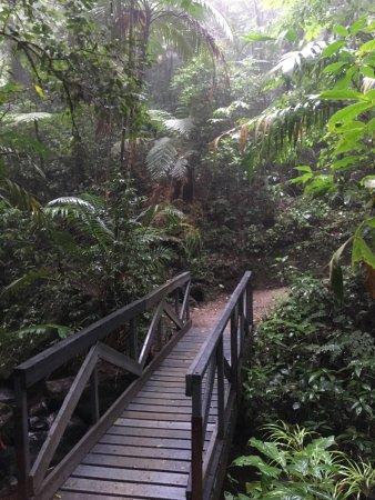 Reserva Biológica Bosque Nuboso Monteverde, Costa Rica: photo3.jpg