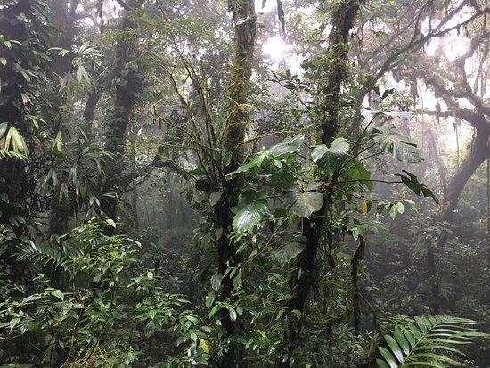 Nationalpark Monteverde, Costa Rica: photo4.jpg