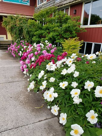 Pretty flowers outside the bakery, yummy treats inside! - Picture of ...