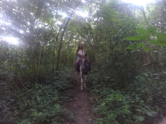 Frederiksted, St. Croix: Riding Tango Through the Rain Forest.