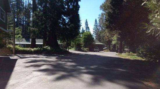 Fish Camp, Kalifornia: the huge redwood