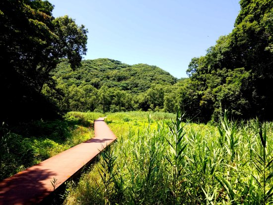 ‪Koajiro Forest‬