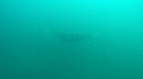 Osa Divers: 593569D8DDECB33DD2AE57BD559A0C2B_large.jpg