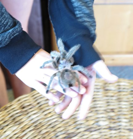 Nature Center of Cape May: I decided not to hold that spider.