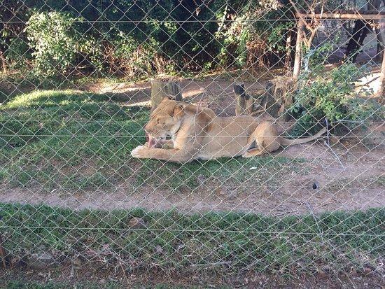 Harare, Zimbabve: photo8.jpg
