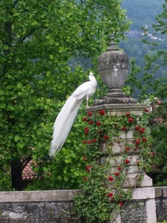 Foto Lombardy