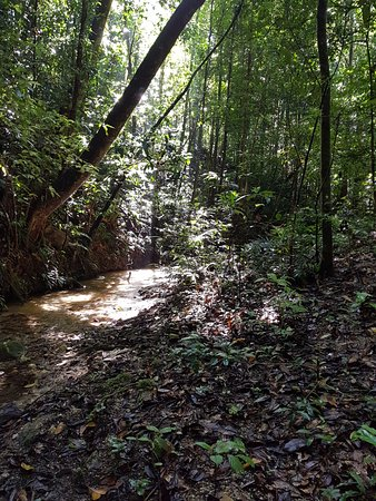 Atherton, Australie : Part of our rainforest drive where we walked up the creek.