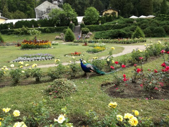 Βοημία, Τσεχική Δημοκρατία: Růžová zahrada