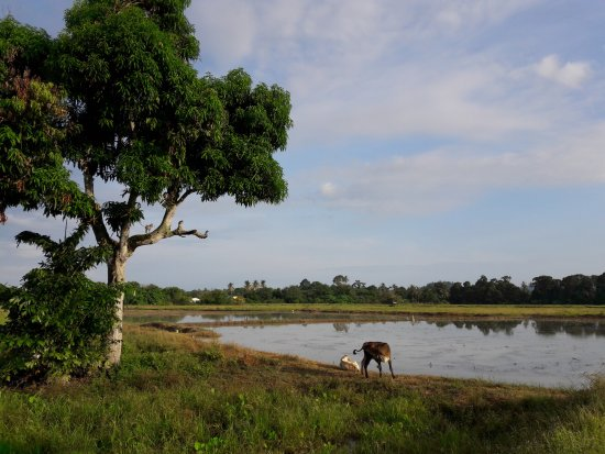 Balik Pulau, Malaysia: Landspace