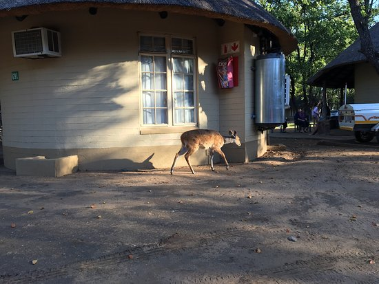 Letaba Rest Camp: photo0.jpg