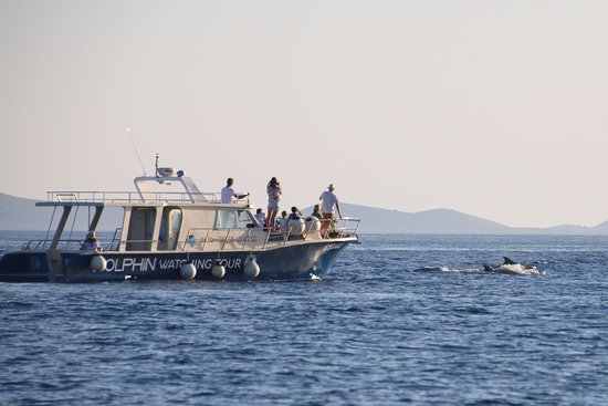 Murter Island, Croacia: Taking photos of dolphins