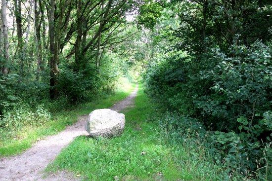 Väla skog naturreservat
