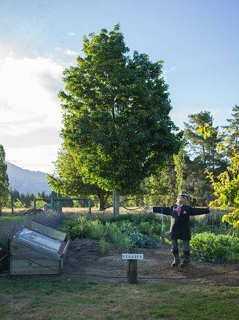 Wanaka, Nuova Zelanda: Veggie garden