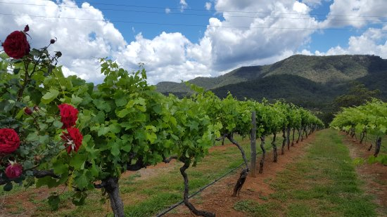 Branxton, Αυστραλία: Joie de Vivre Hunter Valley Tours