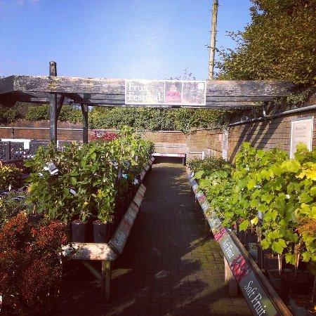 Restaurants stewarts garden centre in christchurch with for Gardening services christchurch
