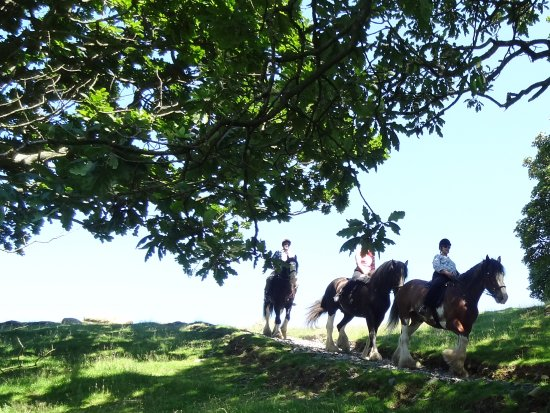 Cumbrian Heavy Horses: Enjoying the ride in stunning countryside.