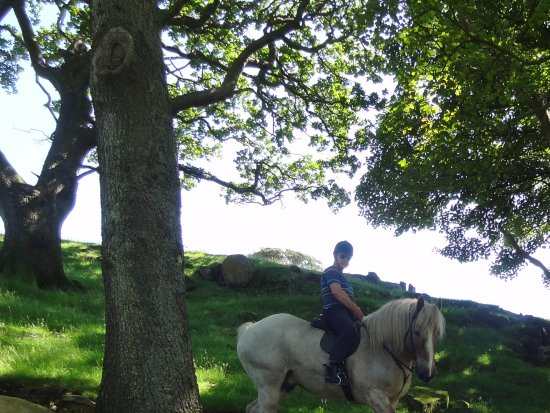 Cumbrian Heavy Horses: The Lone Ranger with Dingle leading the way