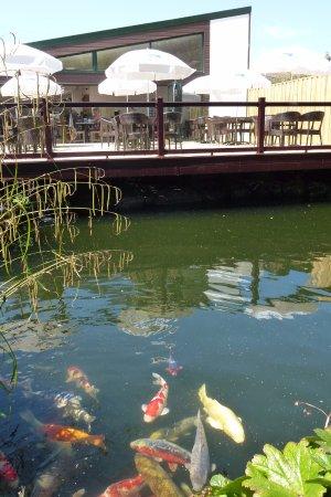 Crediton, UK: Waterside Cafe decking area overlooking koi pond