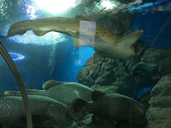 Bang Lamung, Thailand: fish
