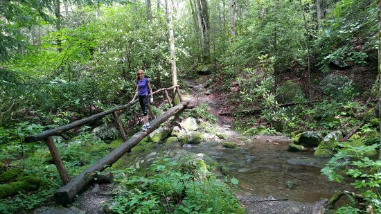Lower Mount Cammerer Trail where it crosses Tom's Creek, one mile from Cosby Campground