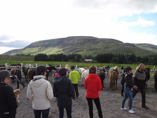 Mosfellsbaer, Iceland: Waiting to be assigned to a horse